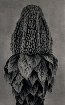 A Silent Mutation/Plants by Roberto Kusterle