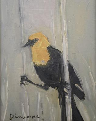 Yellow Headed Blackbird by Stephen Dinsmore